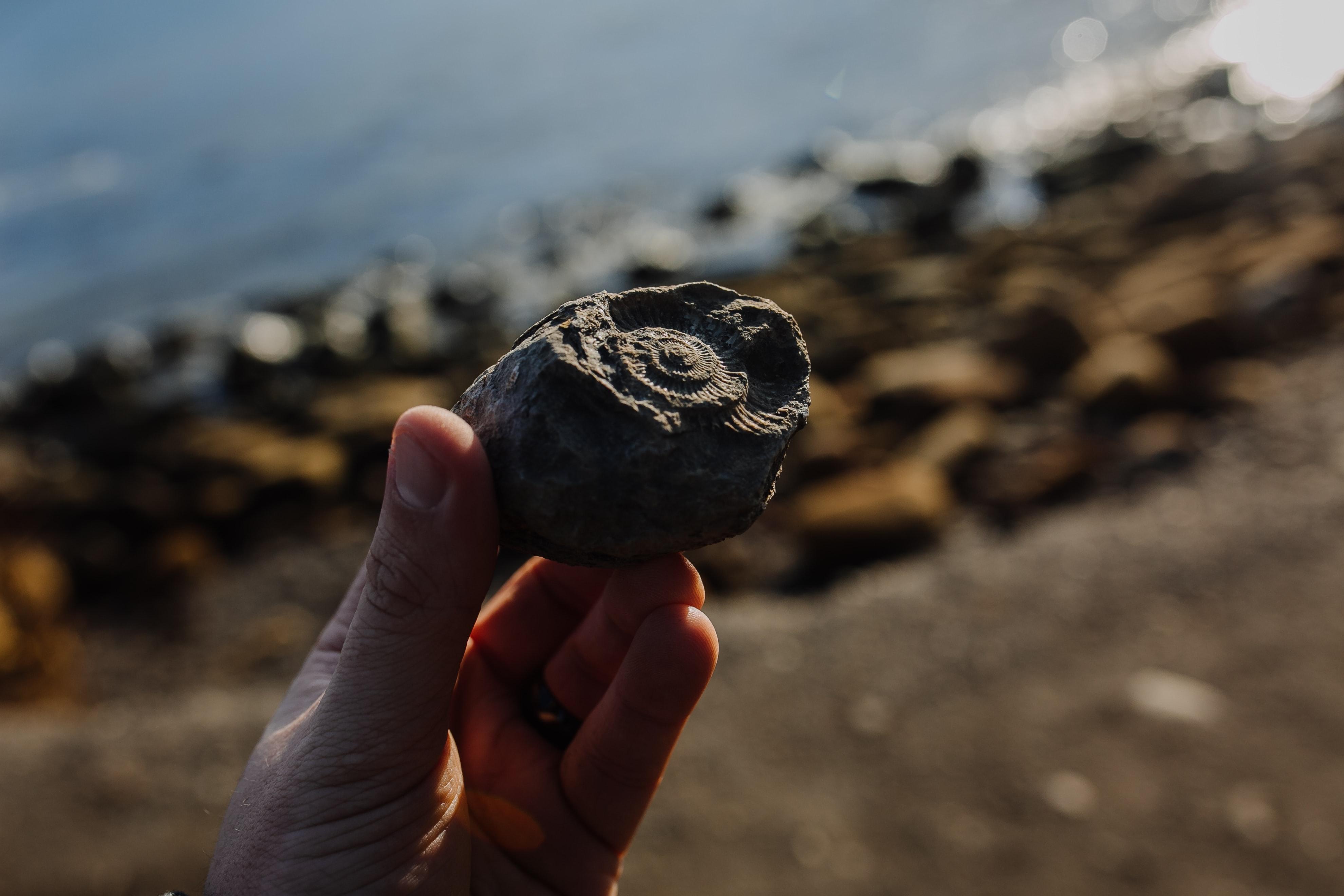 Vyznáte se ve zkamenělinách a minerálech?
